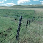Conservation grazing: Ranchers lead the way