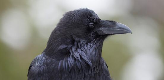Bird v. Bird