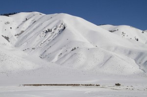 A snow-covered elk feedground in western Wyoming. Photo courtesy Mark Gocke/Wyoming Game and Fish Department.