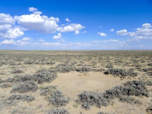 Ant mound in the sagebrush steppe at one of Dibner's study sites. Photo courtesy Reilly Dibner.