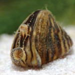 Only YOU Can Prevent Zebra Mussels