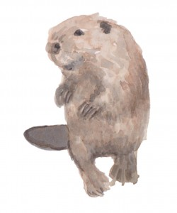 Beaver, by June Glasson
