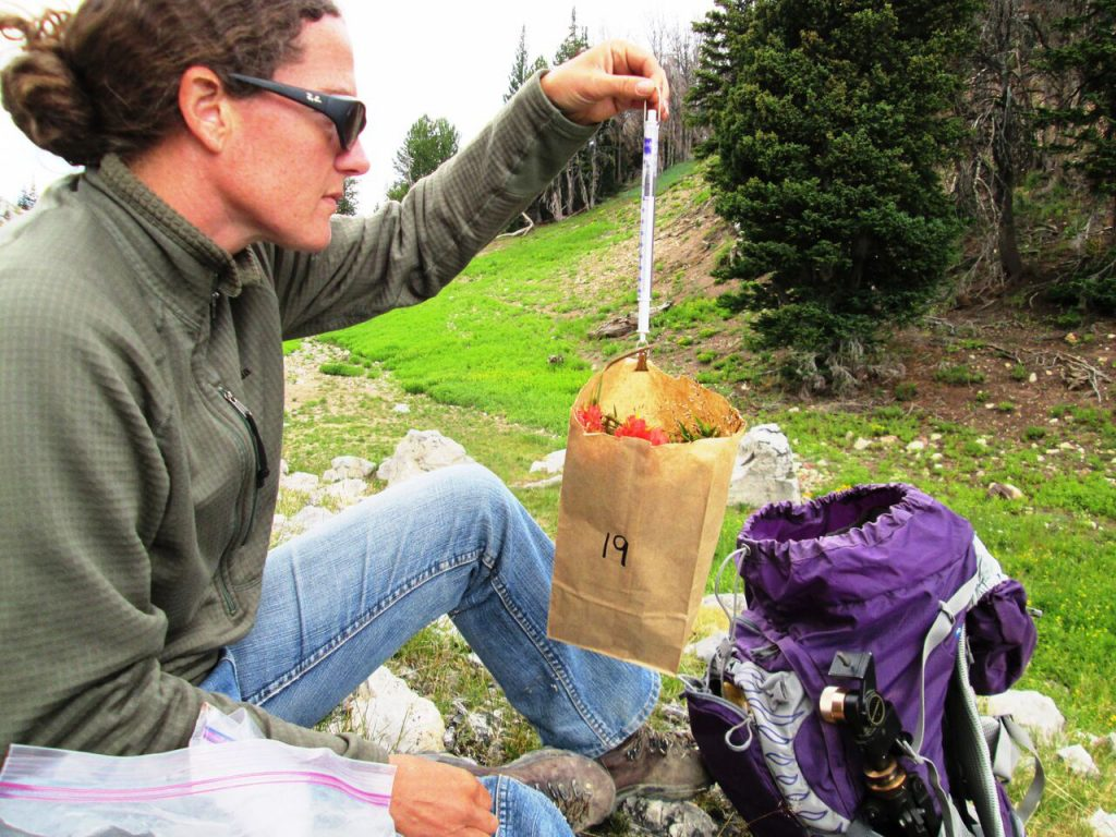 Photo of Embere Hall in the mountains weighing a vegetation sample at one of her study sites.