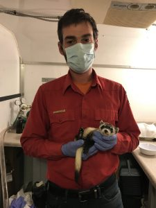 Game & Fish employee holds a black-footed ferret