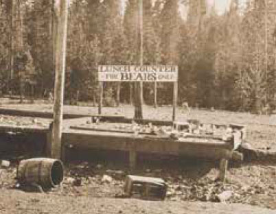 "Historic photo of bear feeding area in Yellowstone National Park in the 1920s with sign reading ""Lunch Counter for Bears Only"""