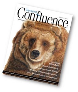 Western Confluence magazine cover, issue 08, Averting Extinction, showing image of a grizzly bear face
