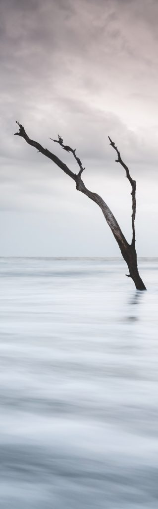 Photo of blackened dead tree sticking out of water on a stormy day