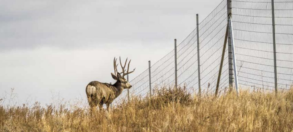 deer next to tall fence