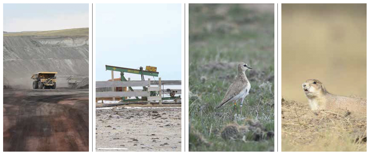 Pictures of coal mine with truck, construction, sage grouse, and prairie dog