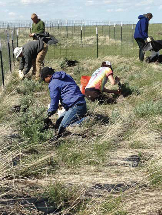 Volunteers planting sage brush